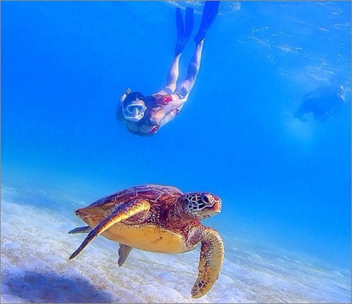 diving with sea turtles in moalboal