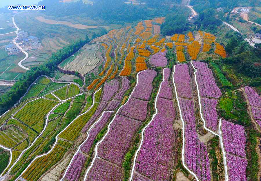 terraces-flower-china