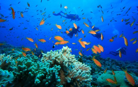Beaches in Cebu. Scuba diving in Cebu beaches is one of the popular and most sought for fun water activities in this provincial island.