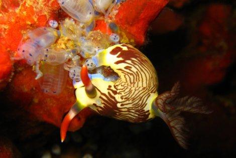 cebu-beaches-sea-slug