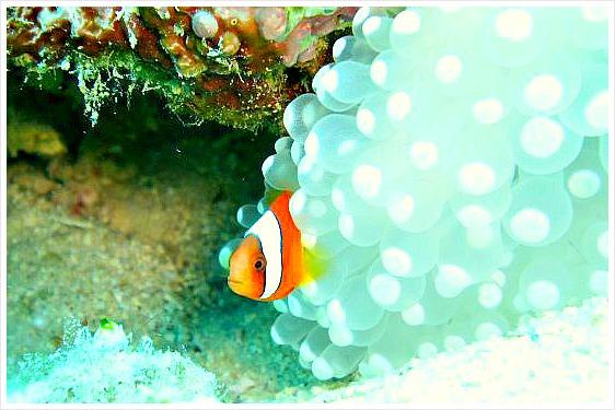 Cebu scuba diving