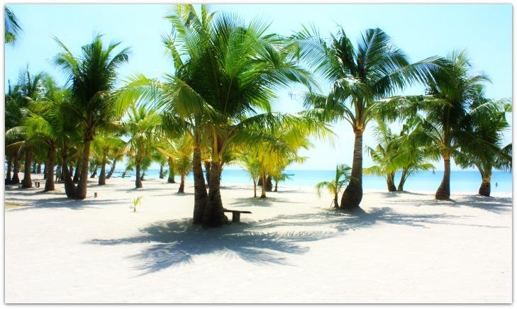 Coconuts at Sugar Beach Resort on Bantayan Island, Cebu