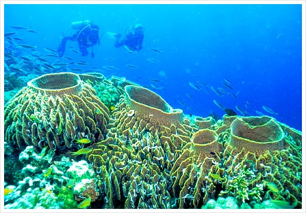 Tubbataha Reef is one of the most famous and has the most diverse marine life. Image Source: tx.english-ch.com