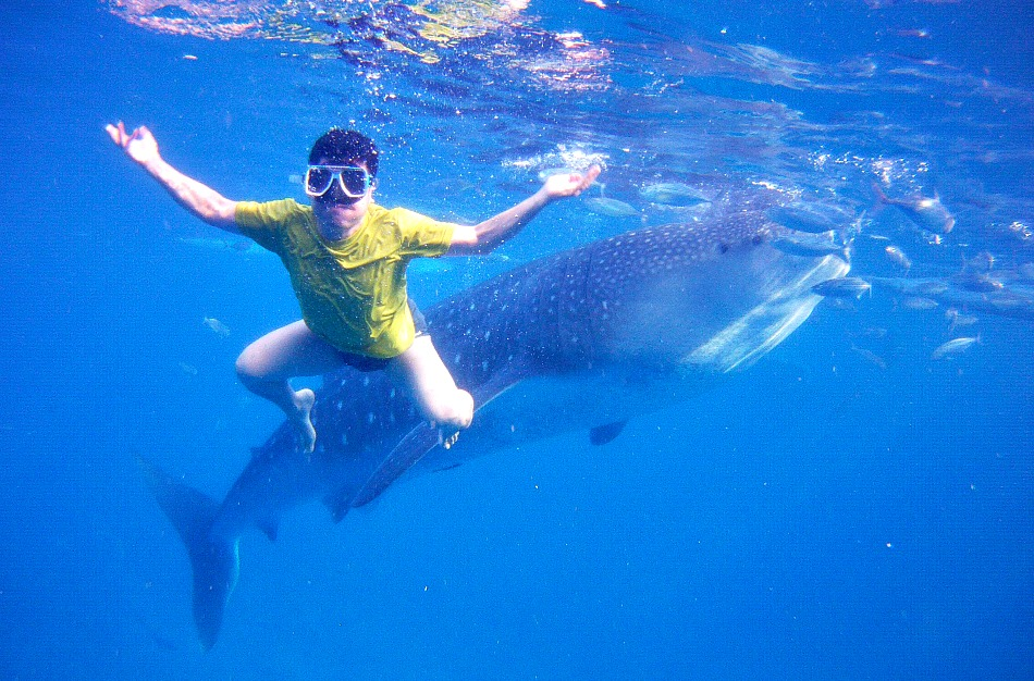 swimming-with-whalesharks