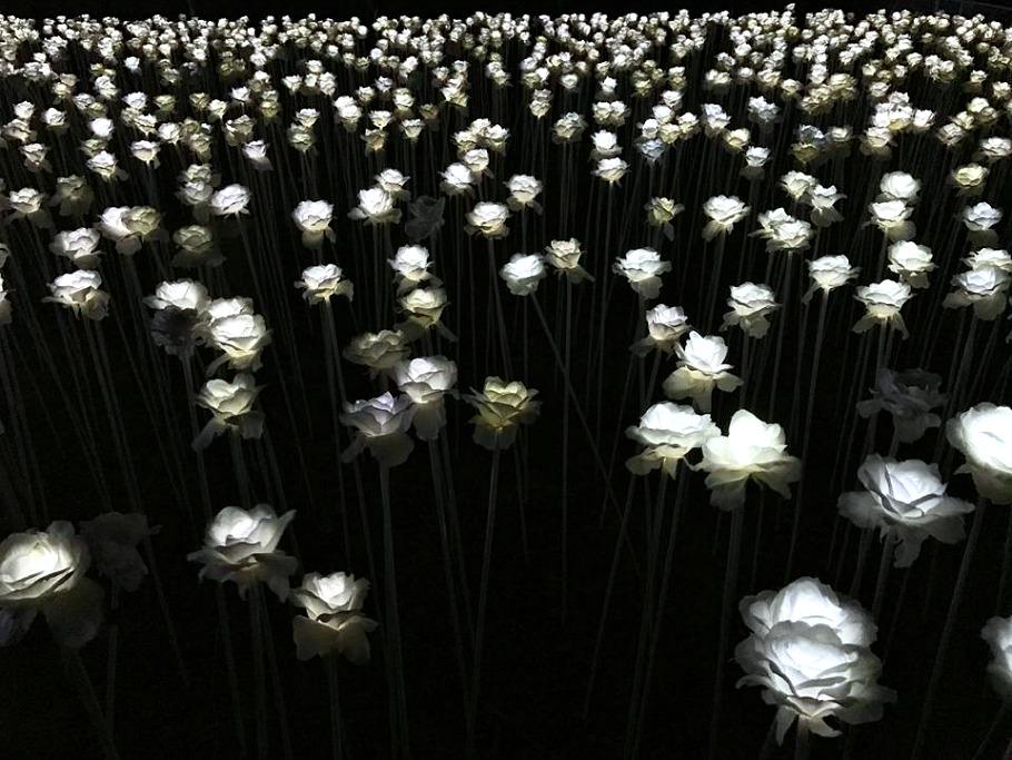 cordova-10k-white-roses-cafe