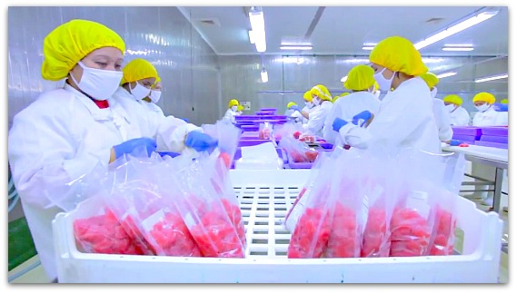 Plastics are being used by packaging industry business companies in Cebu Province