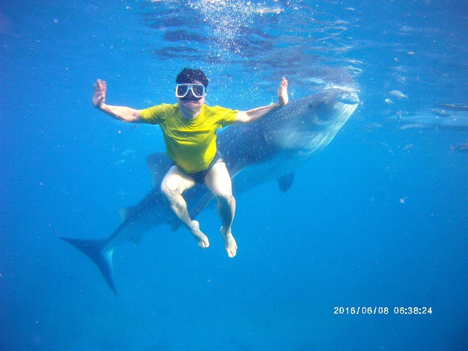 cebu-whaleshark